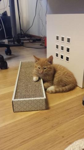 Kitten at paper start.